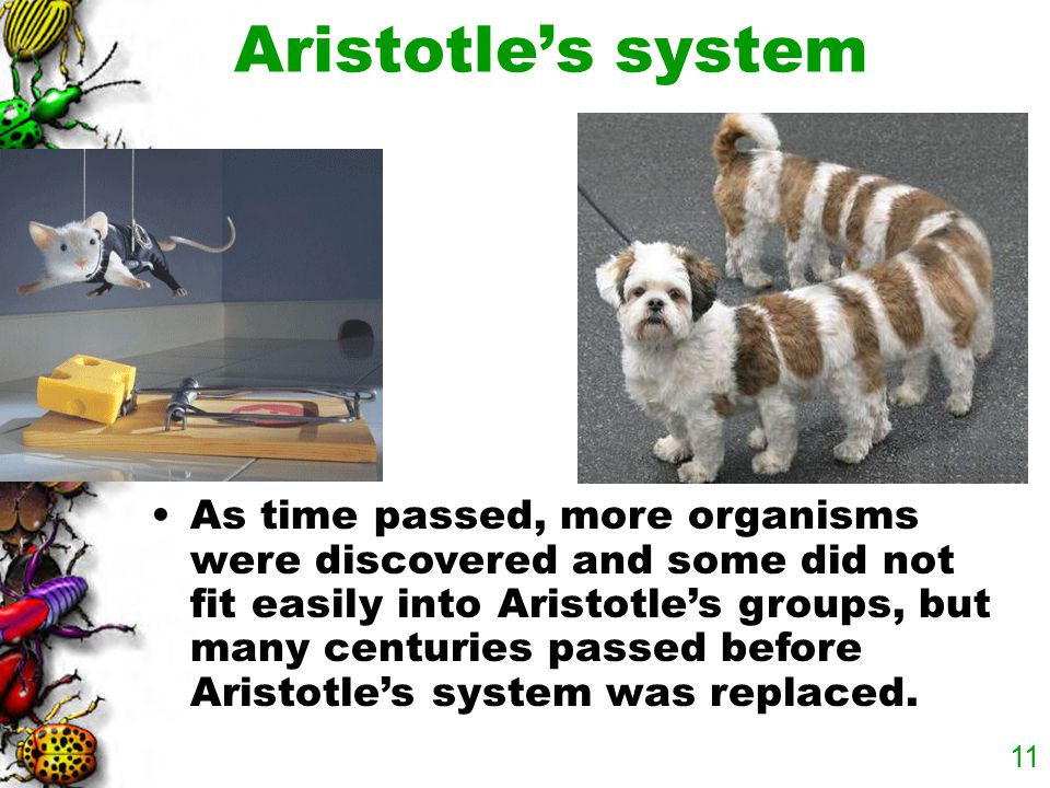 10 He subdivided plants into three groups, herbs, shrubs, and trees, depending on the size and structure of a plant. Aristotle's system