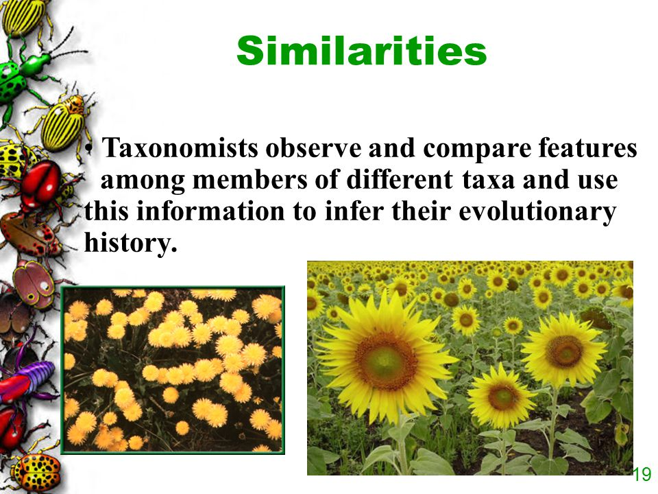 18 For example, plant taxonomists use structural evidence to classify dandelions and sunflowers in the same family, Asteraceae, because they have simi