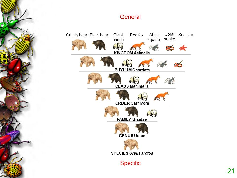 20 Classifying Diversity