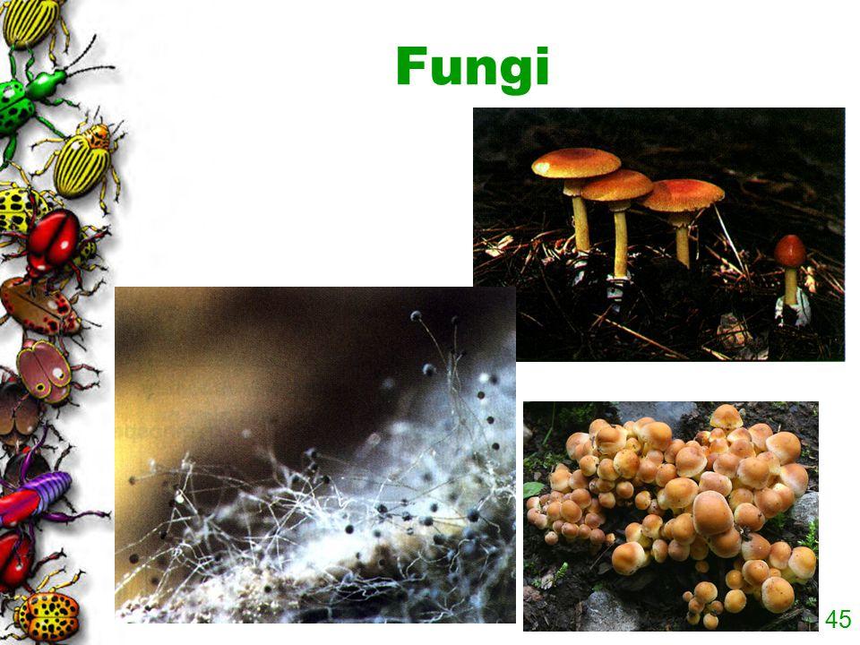 44 A n a l p o r e A Paramecium Kingdom Protista contains diverse species that share some characteristics