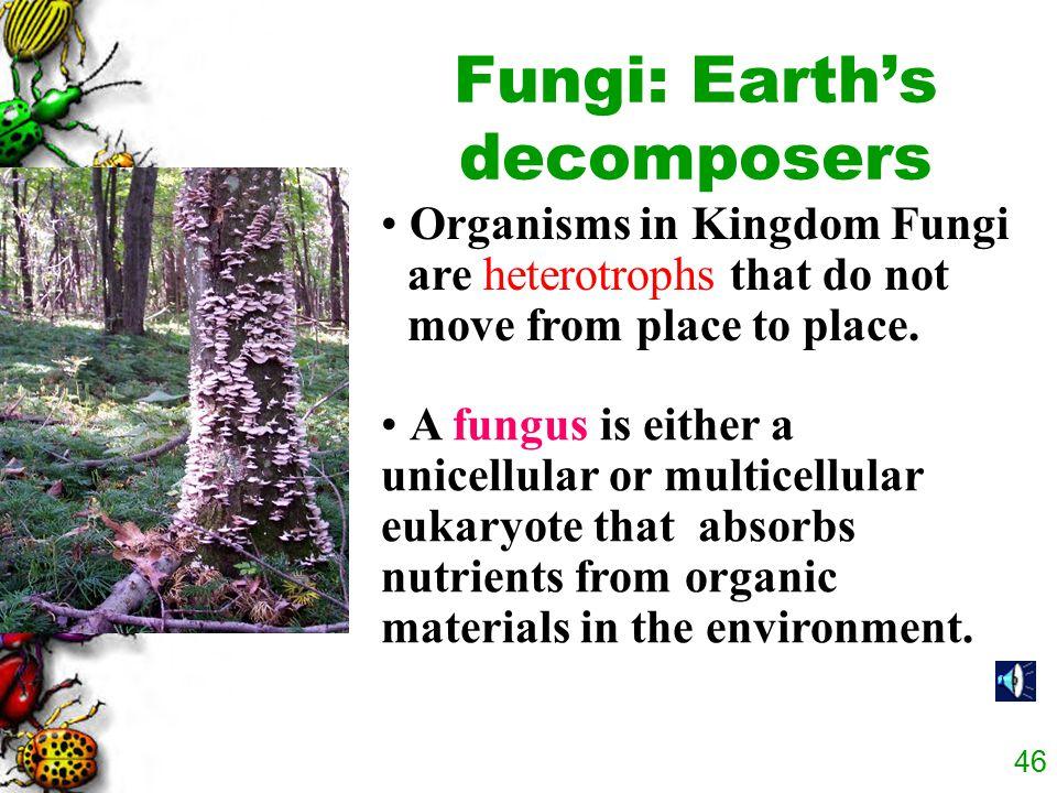 45 Fungi
