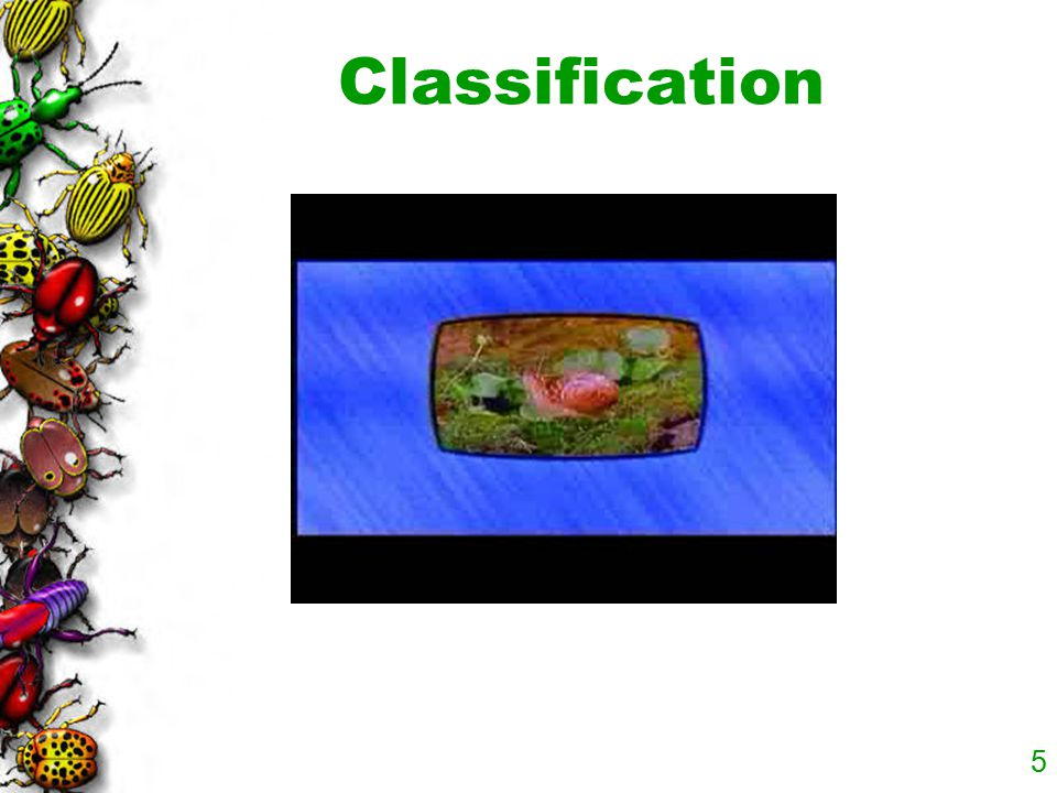 5 Classification