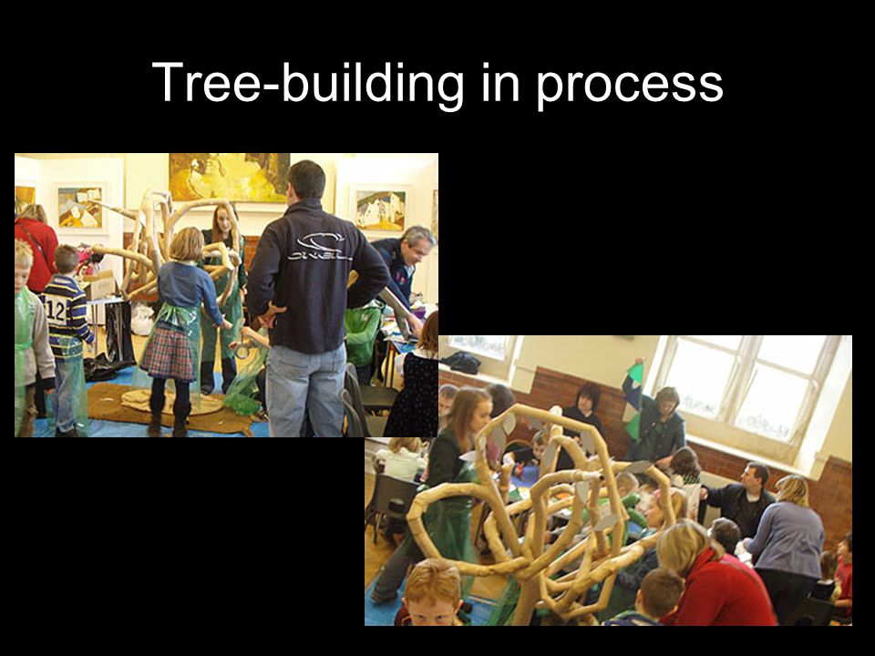 Tree-building in process