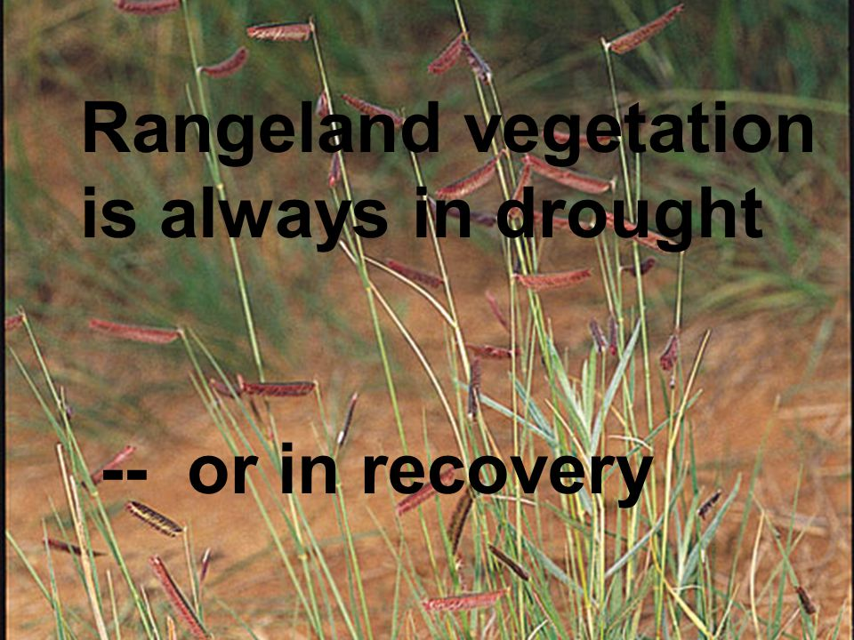 Rangeland vegetation is always in drought -- or in recovery