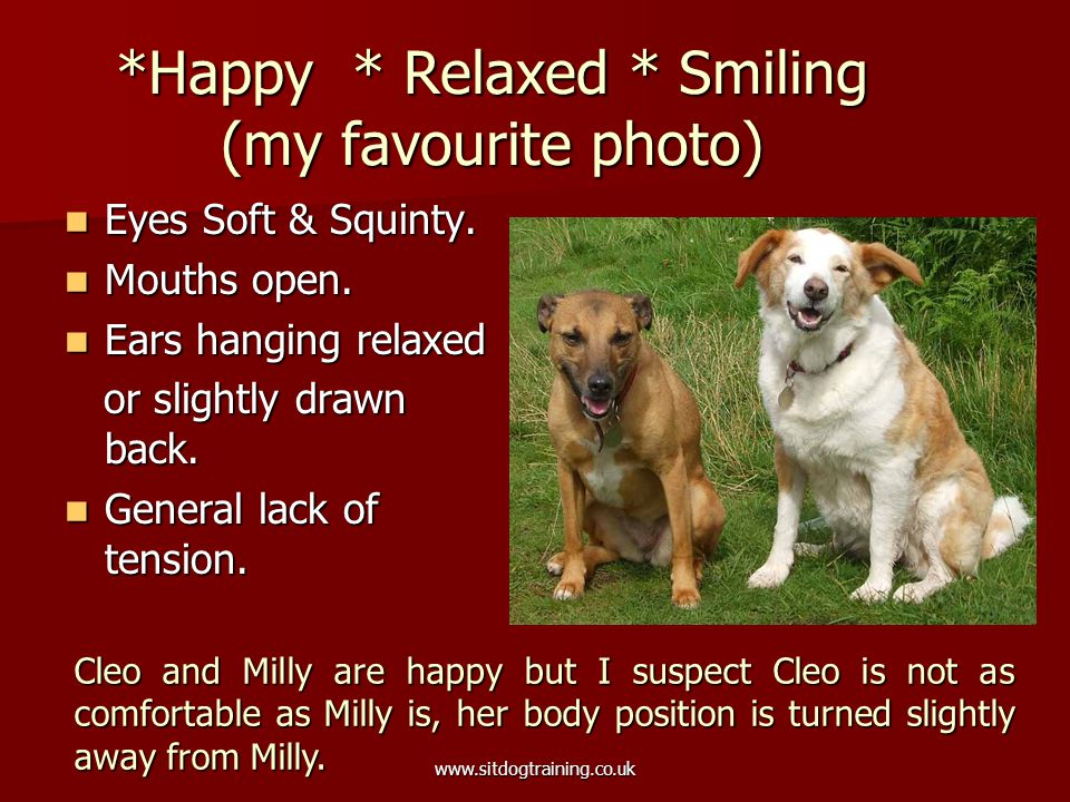 www.sitdogtraining.co.uk *Happy * Relaxed * Smiling (my favourite photo) Eyes Soft & Squinty.