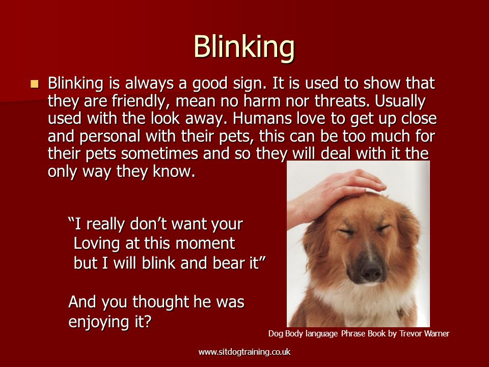 www.sitdogtraining.co.uk Blinking Blinking is always a good sign. It is used to show that they are friendly, mean no harm nor threats. Usually used wi