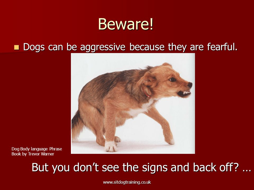 www.sitdogtraining.co.uk Beware. Dogs can be aggressive because they are fearful.