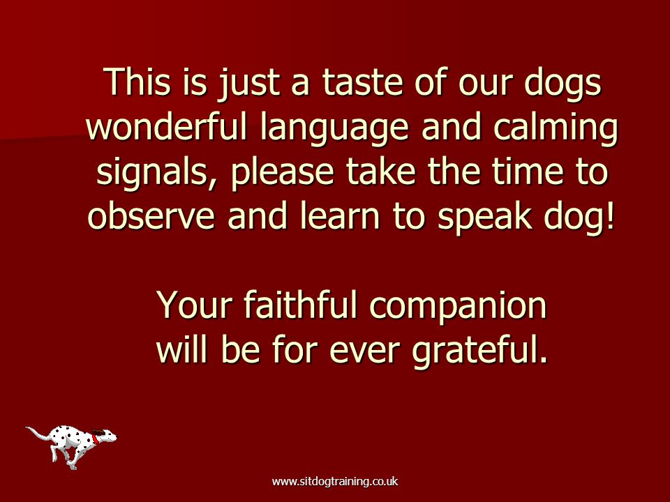 www.sitdogtraining.co.uk This is just a taste of our dogs wonderful language and calming signals, please take the time to observe and learn to speak d