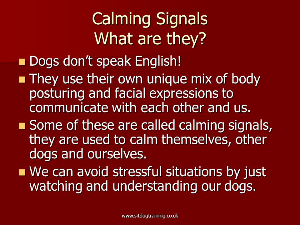 www.sitdogtraining.co.uk Calming Signals What are they.