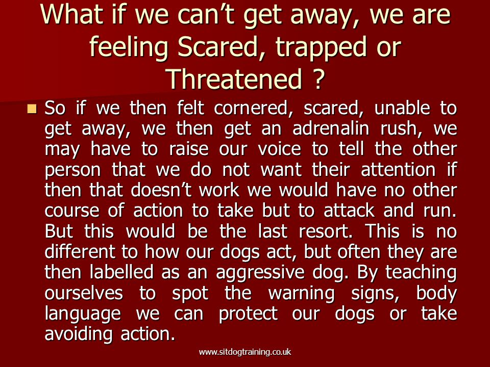 www.sitdogtraining.co.uk What if we can't get away, we are feeling Scared, trapped or Threatened? So if we then felt cornered, scared, unable to get a