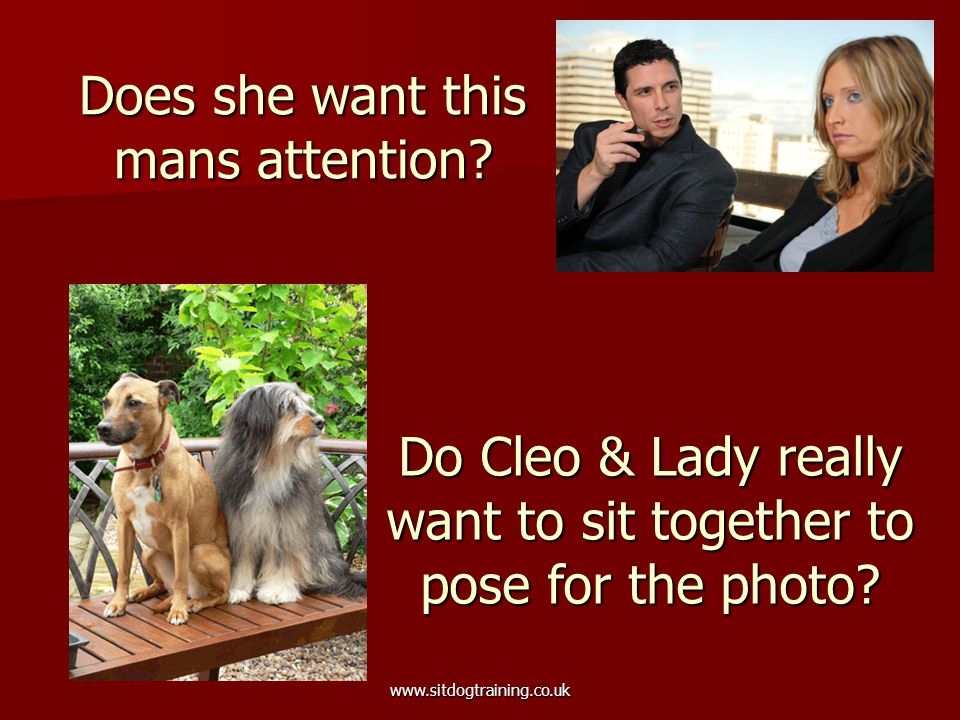 www.sitdogtraining.co.uk Does she want this mans attention? Do Cleo & Lady really want to sit together to pose for the photo?