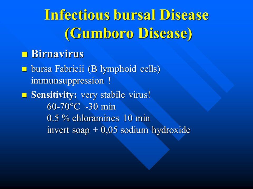 Infectious bursal Disease (Gumboro Disease) Birnavirus Birnavirus bursa Fabricii (B lymphoid cells) immunsuppression .