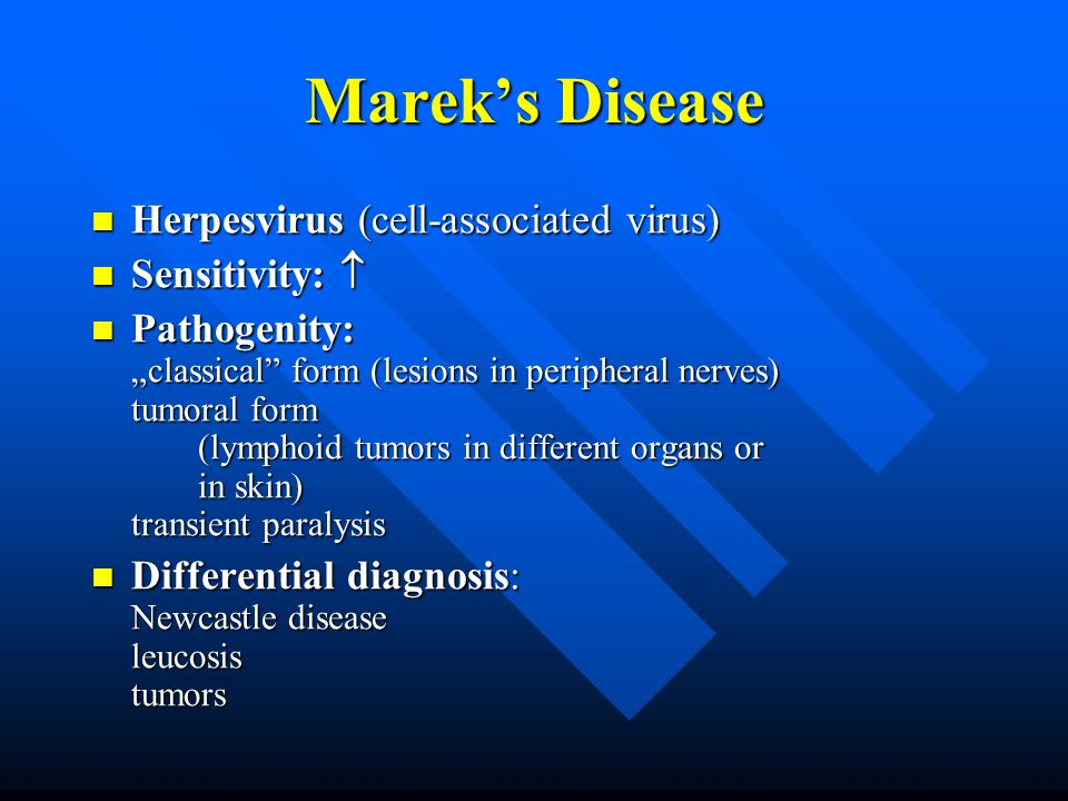 "Marek's Disease Herpesvirus (cell-associated virus) Herpesvirus (cell-associated virus) Sensitivity:  Sensitivity:  Pathogenity: ""classical form (lesions in peripheral nerves) tumoral form (lymphoid tumors in different organs or in skin) transient paralysis Pathogenity: ""classical form (lesions in peripheral nerves) tumoral form (lymphoid tumors in different organs or in skin) transient paralysis Differential diagnosis: Newcastle disease leucosis tumors Differential diagnosis: Newcastle disease leucosis tumors"