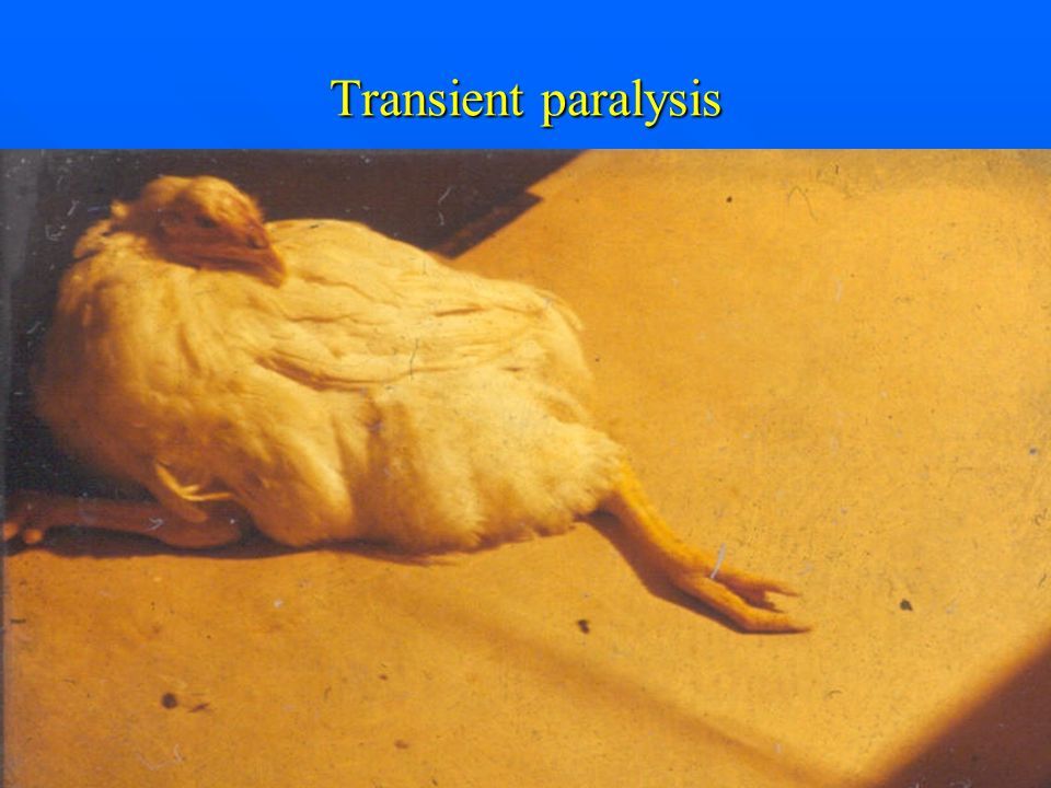 Transient paralysis