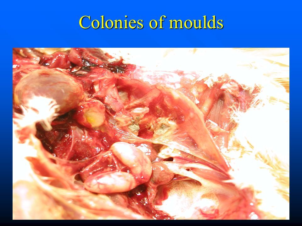Colonies of moulds