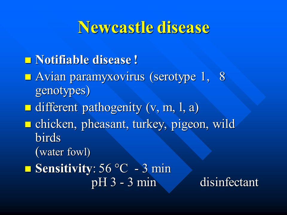 Newcastle disease Notifiable disease . Notifiable disease .