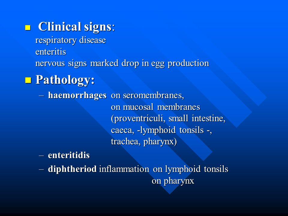Laryngs (left - normal) (medium - hyperemic) (right - fibrin)