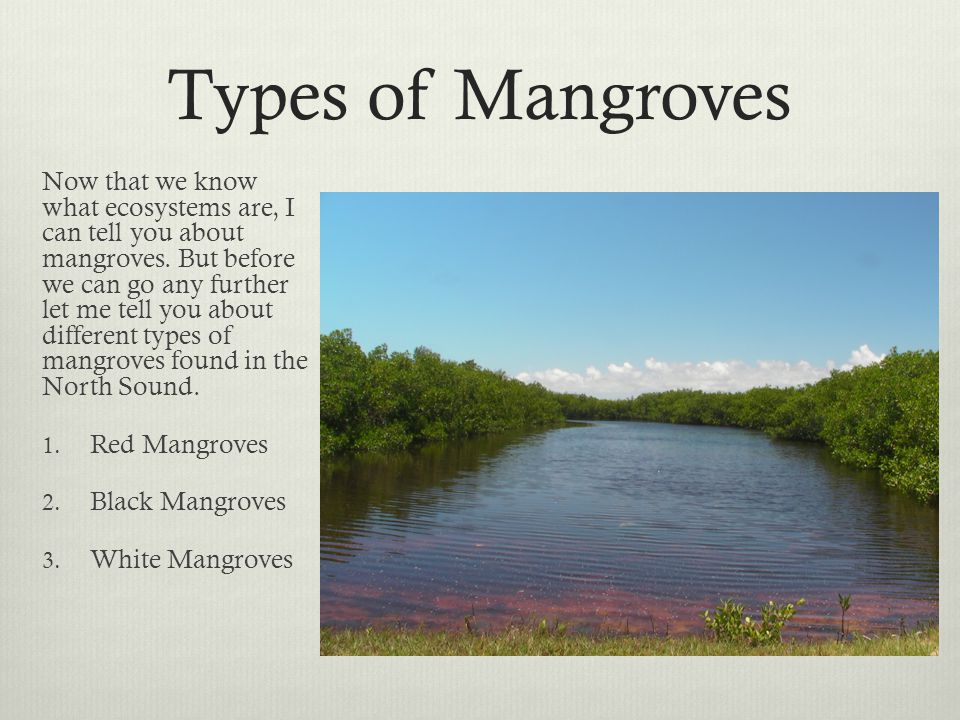 Types of Mangroves Now that we know what ecosystems are, I can tell you about mangroves. But before we can go any further let me tell you about differ