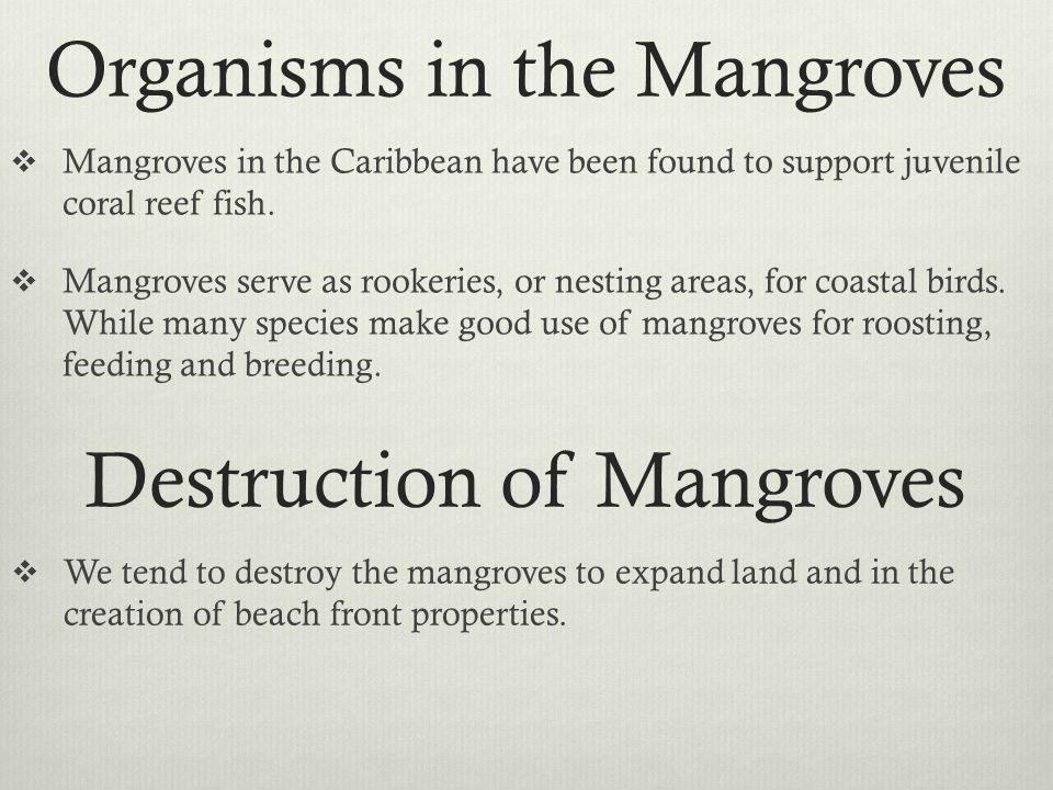 Organisms in the Mangroves  Mangroves in the Caribbean have been found to support juvenile coral reef fish.