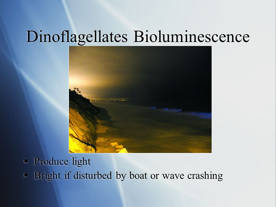  Produce light  Bright if disturbed by boat or wave crashing