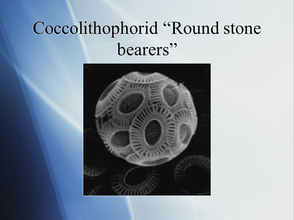 Coccolithophorid Bloom