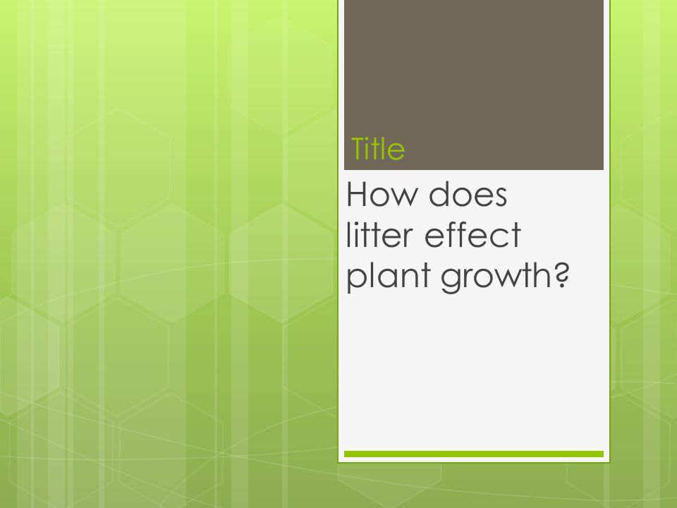 Title How does litter effect plant growth?
