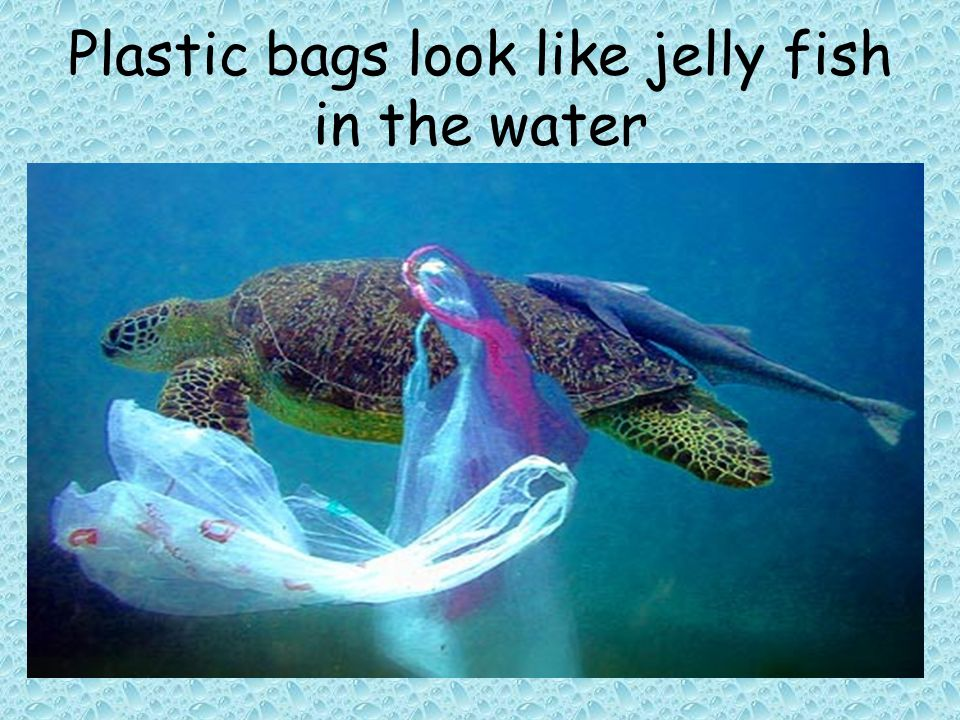Plastic bags look like jelly fish in the water