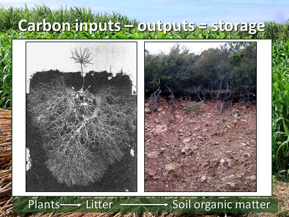Carbon inputs – outputs = storage PlantsLitterSoil organic matter