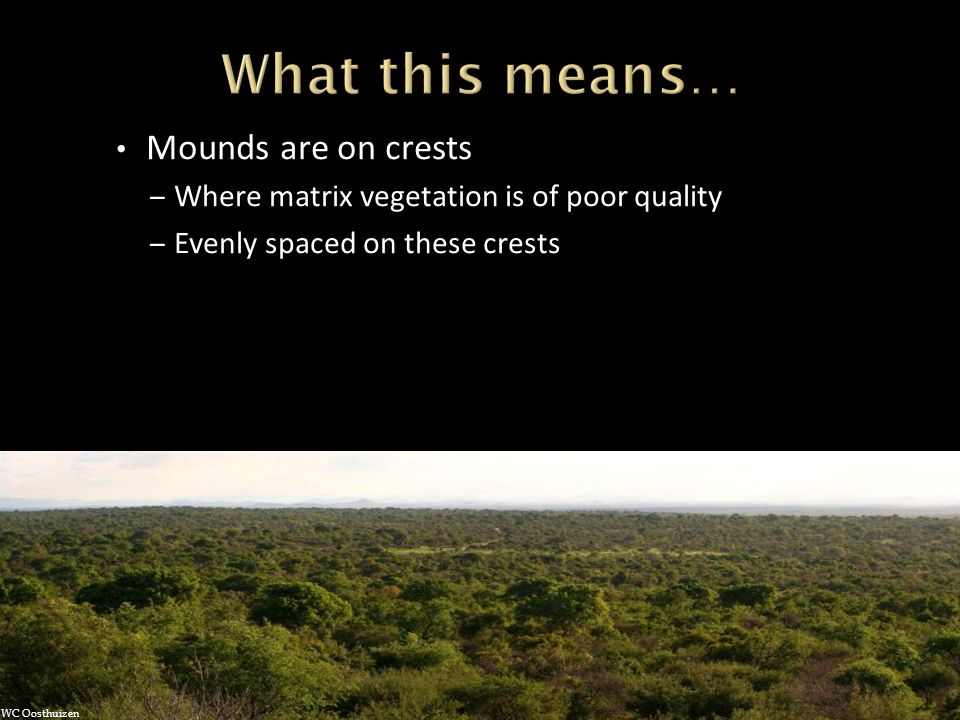 Mounds are on crests – Where matrix vegetation is of poor quality – Evenly spaced on these crests WC Oosthuizen