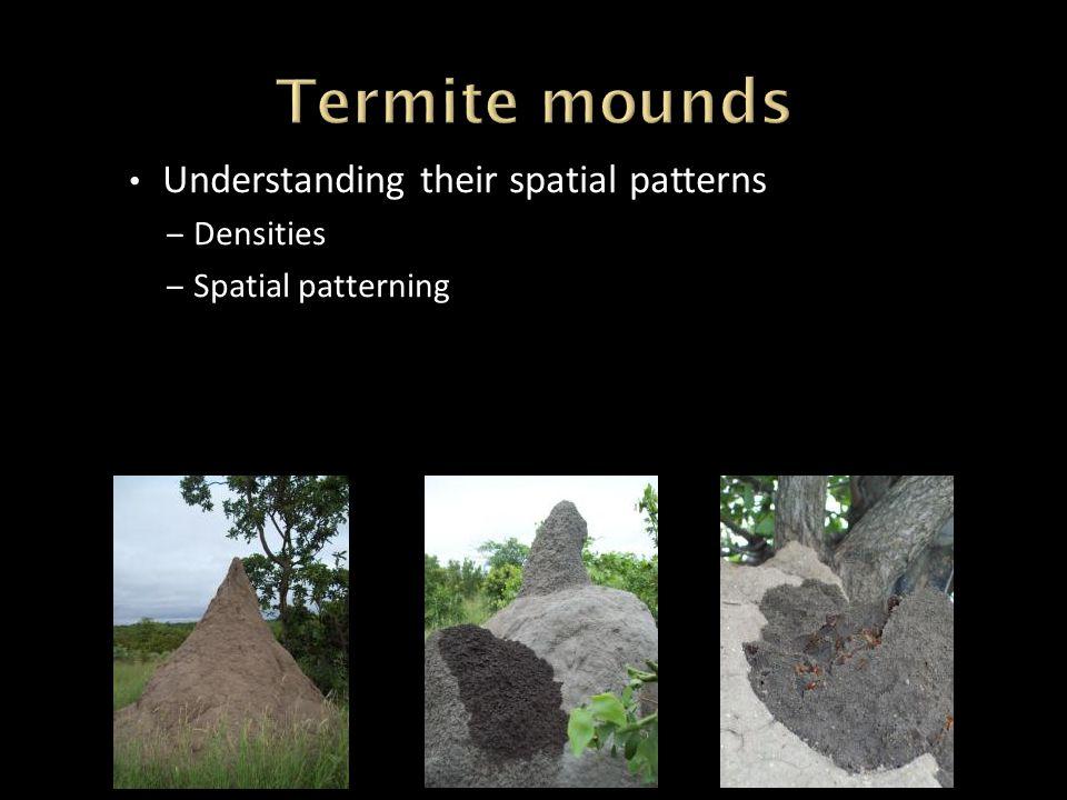 Understanding their spatial patterns – Densities – Spatial patterning