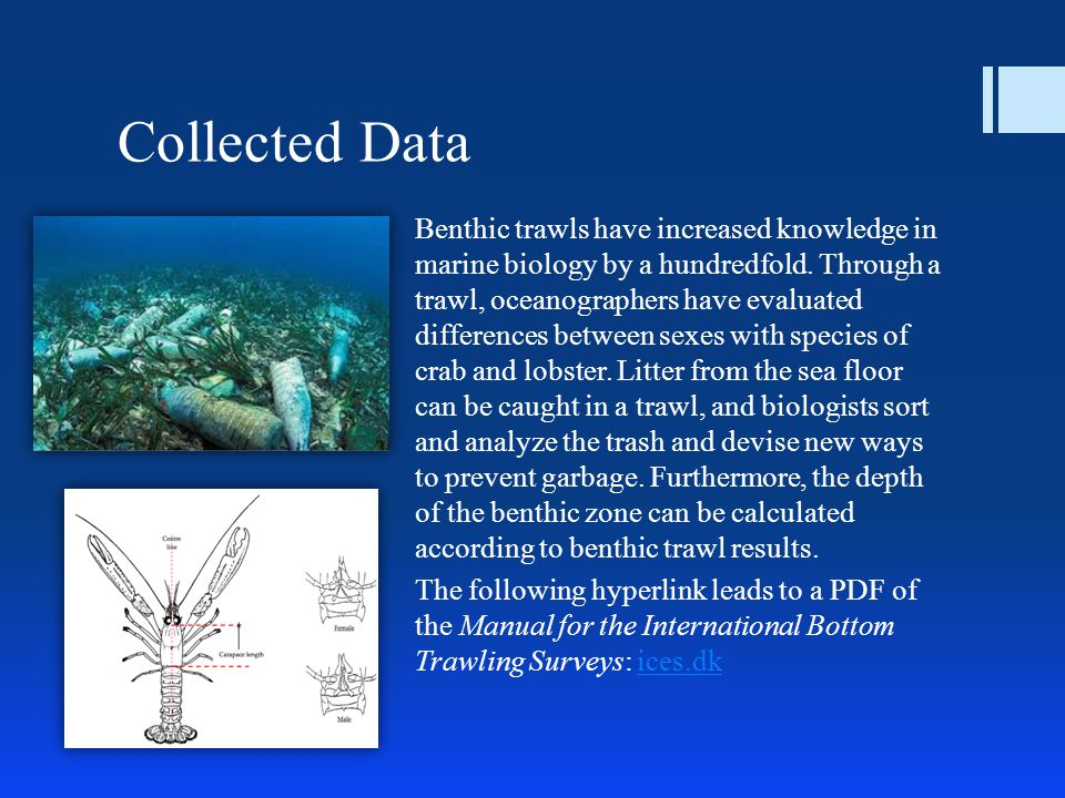 Collected Data Benthic trawls have increased knowledge in marine biology by a hundredfold.