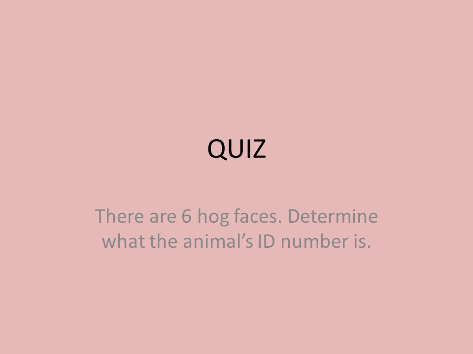 QUIZ There are 6 hog faces. Determine what the animal's ID number is.