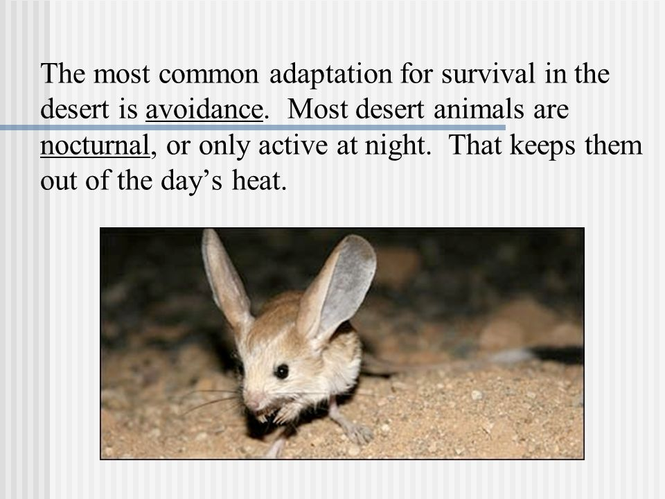 The most common adaptation for survival in the desert is avoidance.