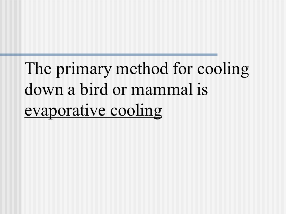 The primary method for cooling down a bird or mammal is evaporative cooling
