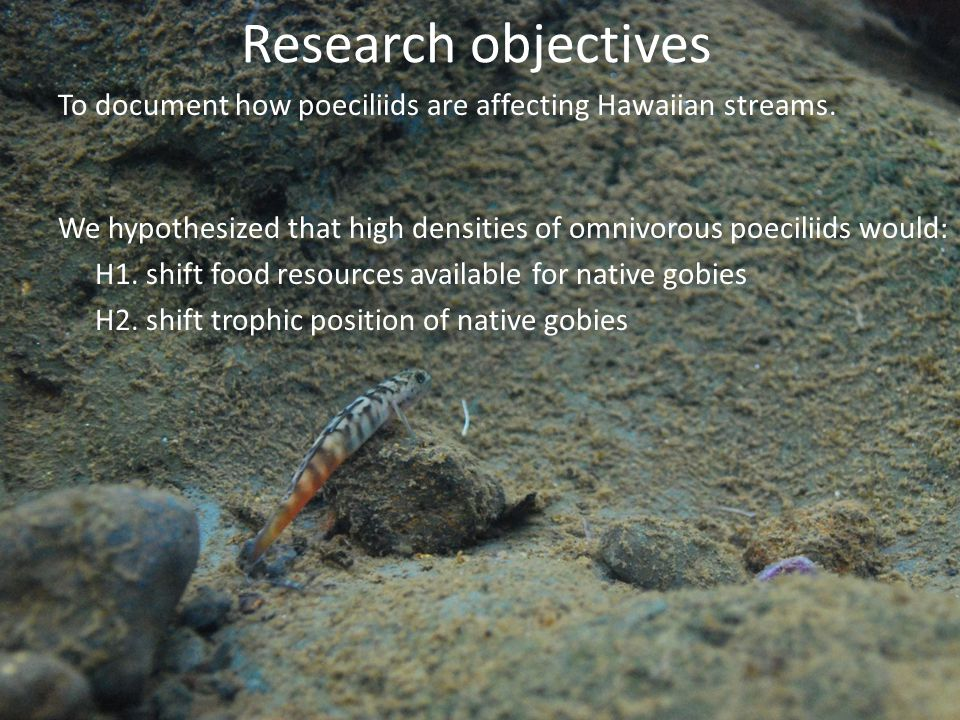Research objectives To document how poeciliids are affecting Hawaiian streams.
