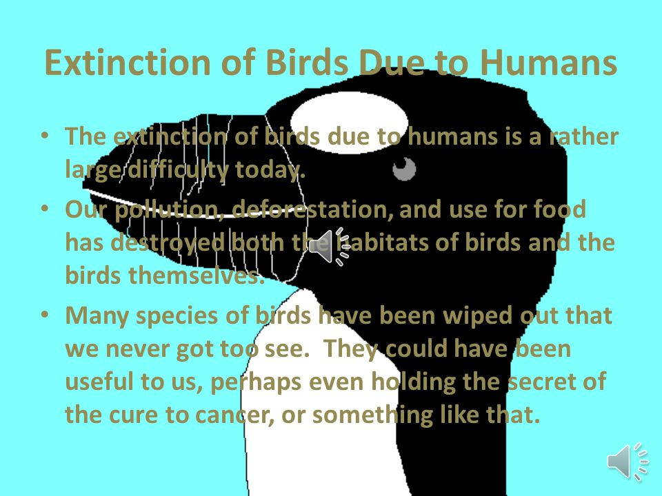 Extinction of Bird Species Due to Humans By Katie