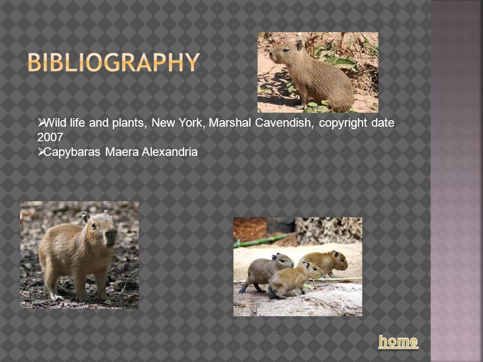  Wild life and plants, New York, Marshal Cavendish, copyright date 2007  Capybaras Maera Alexandria