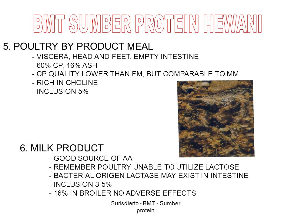 Surisdiarto - BMT - Sumber protein 5. POULTRY BY PRODUCT MEAL - VISCERA, HEAD AND FEET, EMPTY INTESTINE - 60% CP, 16% ASH - CP QUALITY LOWER THAN FM,