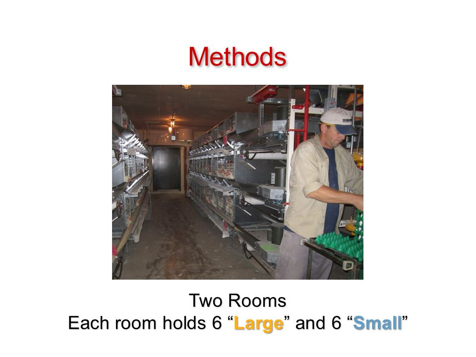 Two Rooms Each room holds 6 Large and 6 Small Methods