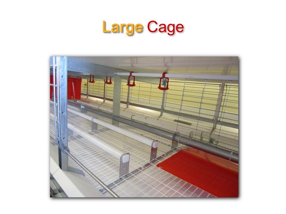 Large Large Cage