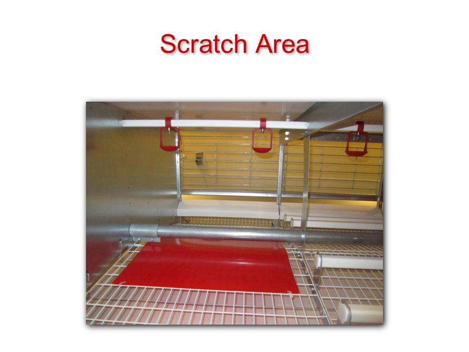Scratch Area