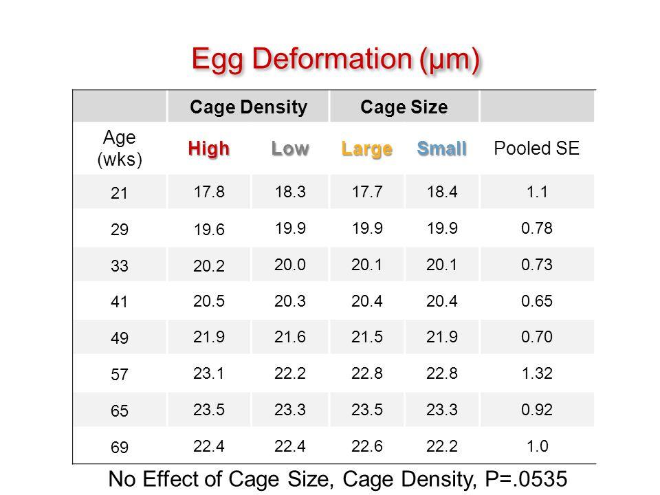 (μm) Egg Deformation (μm) Cage DensityCage Size Age (wks)HighLowLargeSmallPooled SE 21 17.818.317.718.41.1 29 19.6 19.9 0.78 33 20.2 20.020.1 0.73 41 20.520.320.4 0.65 49 21.921.621.521.90.70 57 23.122.222.8 1.32 65 23.523.323.523.30.92 69 22.4 22.622.21.0 No Effect of Cage Size, Cage Density, P=.0535