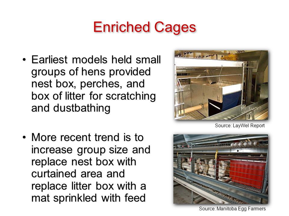 Source: LayWel Report Enriched Cages Earliest models held small groups of hens provided nest box, perches, and box of litter for scratching and dustbathingEarliest models held small groups of hens provided nest box, perches, and box of litter for scratching and dustbathing More recent trend is to increase group size and replace nest box with curtained area and replace litter box with a mat sprinkled with feedMore recent trend is to increase group size and replace nest box with curtained area and replace litter box with a mat sprinkled with feed Source: Manitoba Egg Farmers