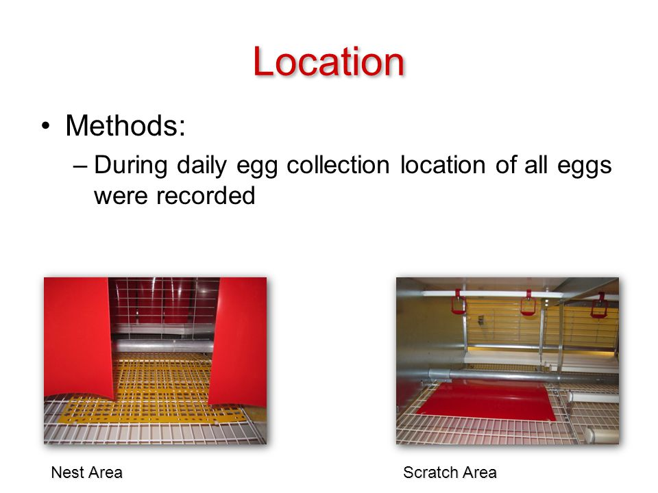 Location Methods: –During daily egg collection location of all eggs were recorded Scratch Area Nest Area