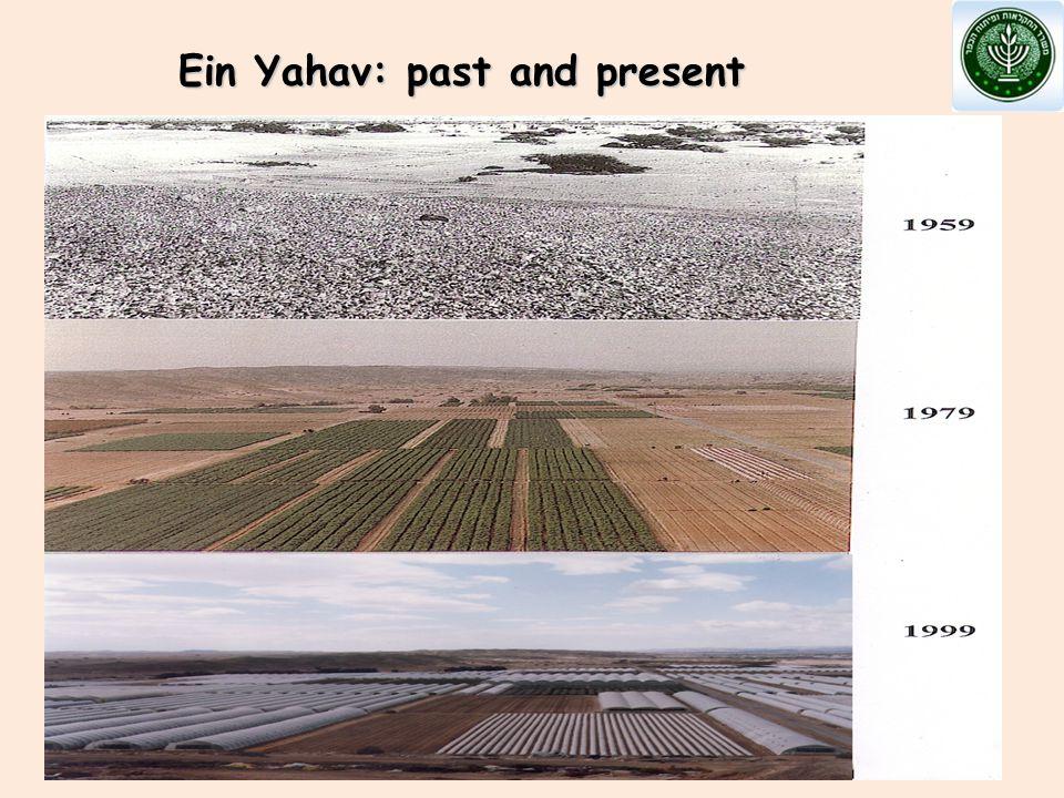 Ein Yahav: past and present