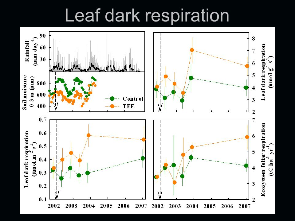 Leaf dark respiration