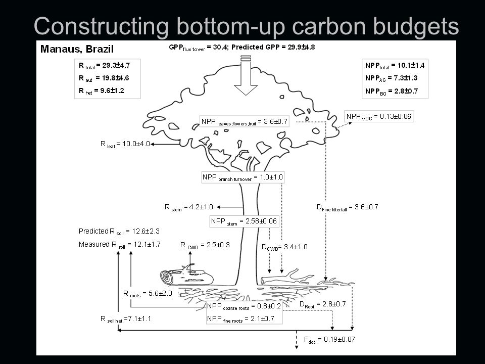 Constructing bottom-up carbon budgets