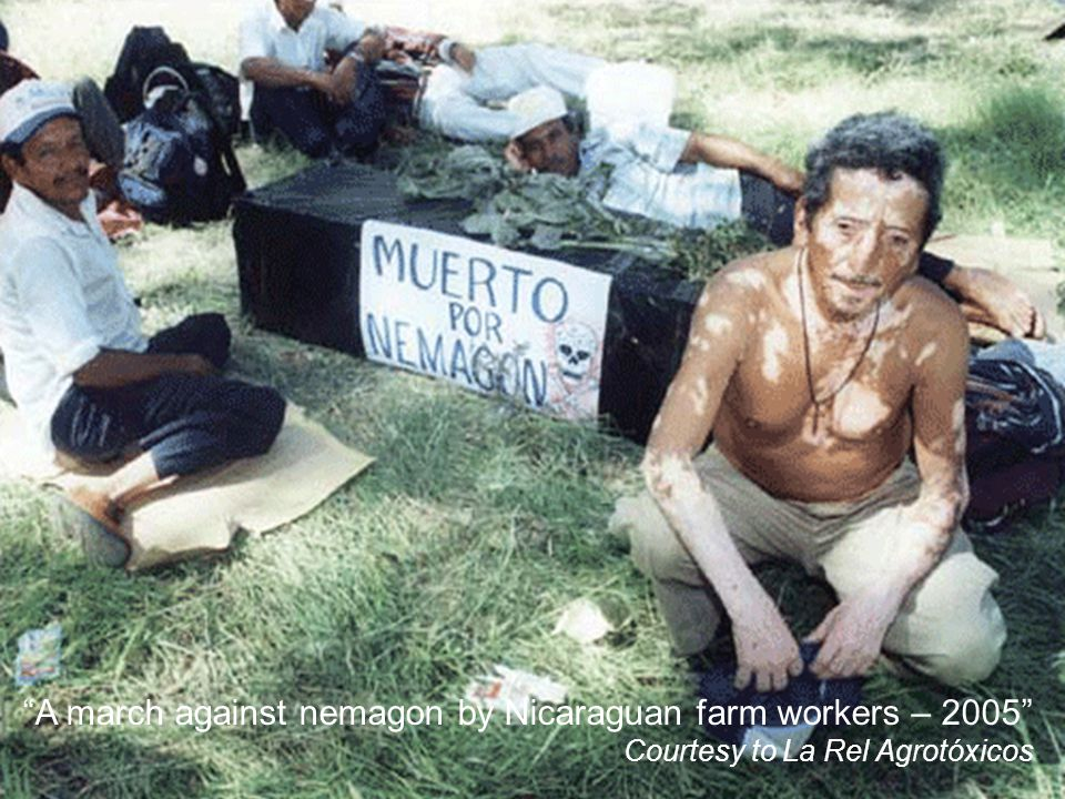 A march against nemagon by Nicaraguan farm workers – 2005 Courtesy to La Rel Agrotóxicos