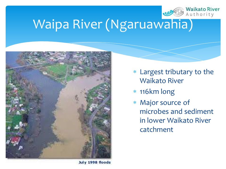  Largest tributary to the Waikato River  116km long  Major source of microbes and sediment in lower Waikato River catchment Waipa River (Ngaruawahi