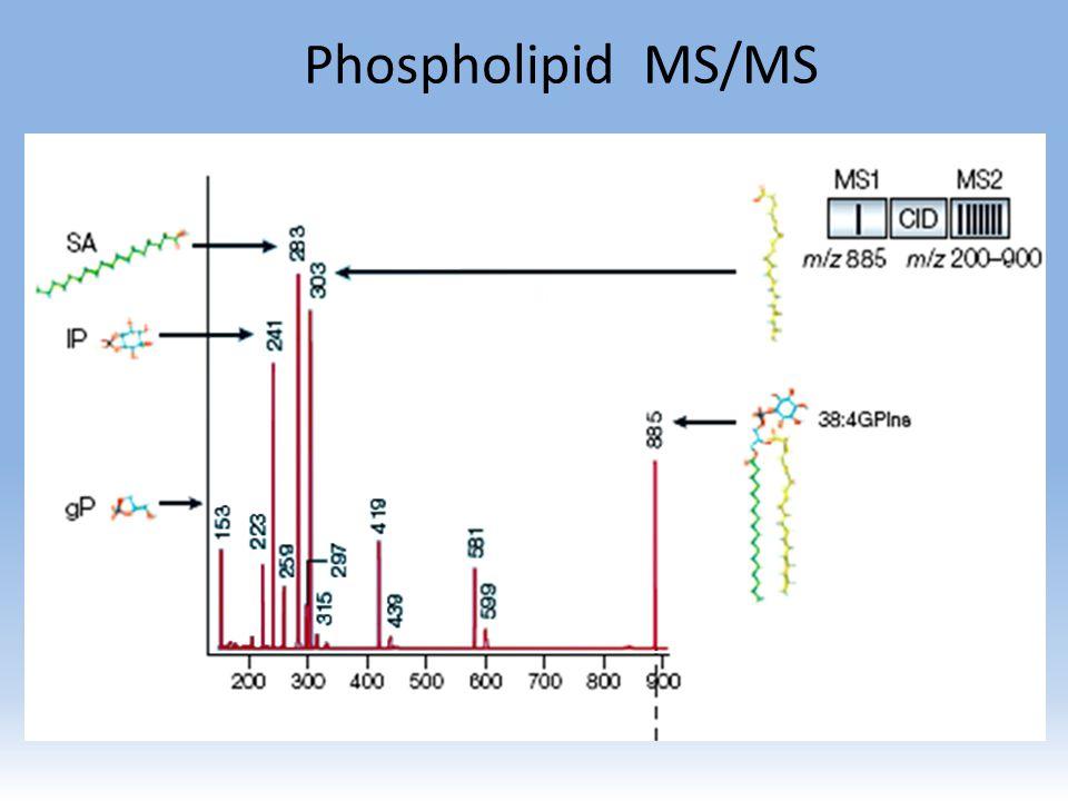 Phospholipid MS/MS